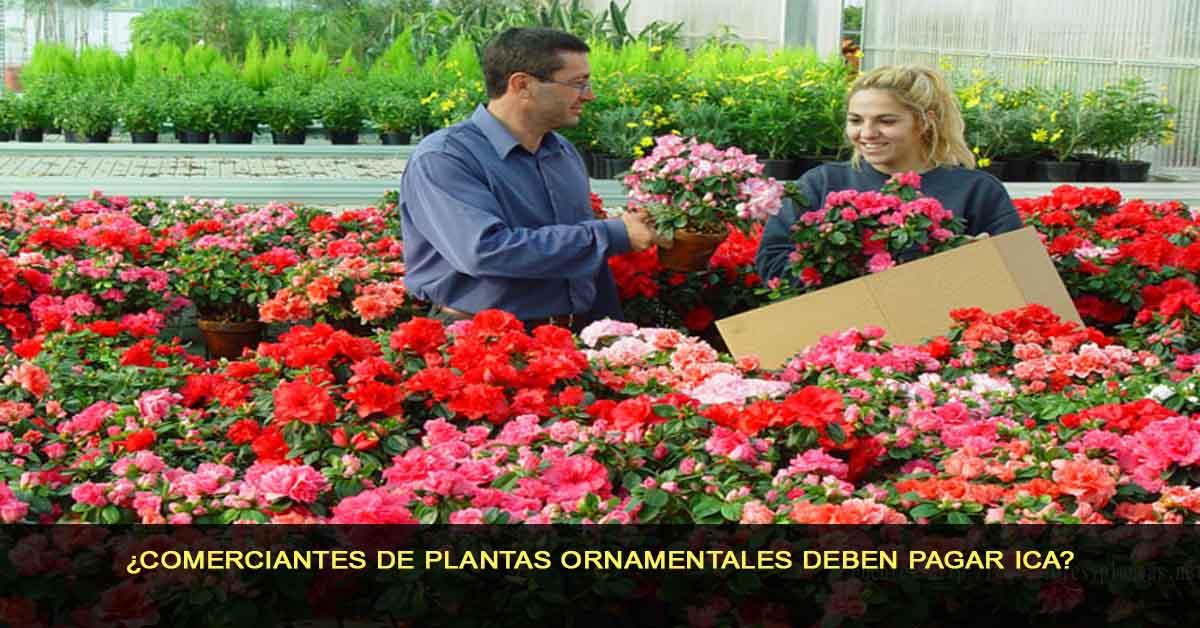 ¿Comerciantes de plantas ornamentales deben pagar ICA?